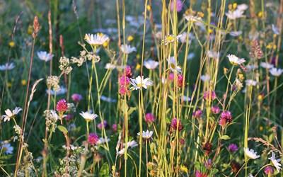 Bild av blomsteräng