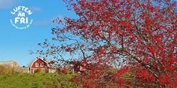 Vackert höstträd någonstans längs med Arkelstorpsleden