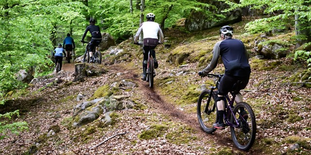 Fyra personer cyklar mountainbike i naturen