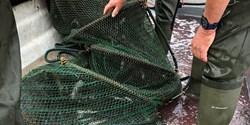En ålhomma i en båt